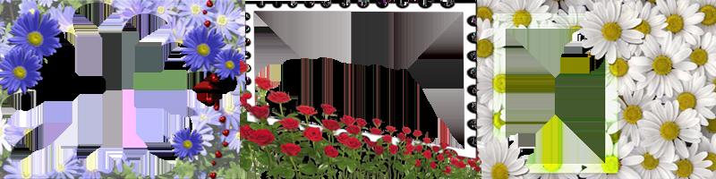 Весенние цветочные рамки для фотошопа